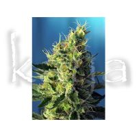 Sweet Seeds Sweet Pure CBD 25pces
