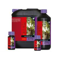 Coco Booster Universal Bcuzz Atami